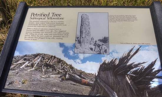 Current sign at Yellowstone's Petrified Tree exhibit (9/06/15)