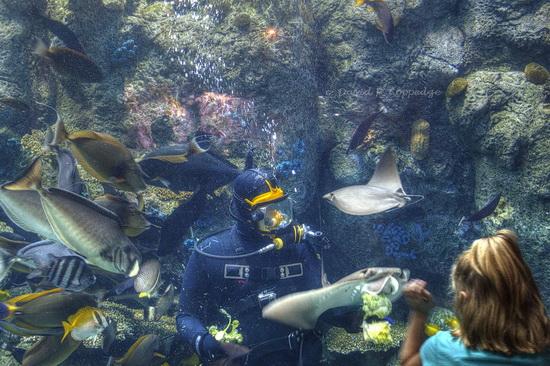Long Beach Aquarium of the Pacific, by David Coppedge