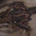 Fossil Bird Oil Stuns Scientists