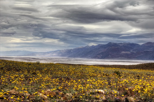 "Rare ""superbloom"" in Death Valley, Feb. 17, 2016"