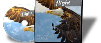 Illustra Media: Flight