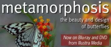 Illustra Media: Metamorphosis