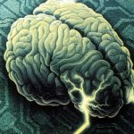 Your Soul Comes With Automated Brain Software