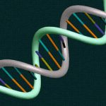 The 4D Nucleome Project Helps Creationist Research