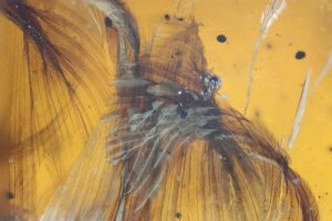 A Bird, a Mushroom, and a Fly Fossilized Fast – CEH