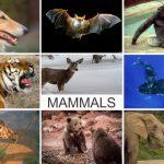 Giraffe Genome Doesn't Support Darwinism