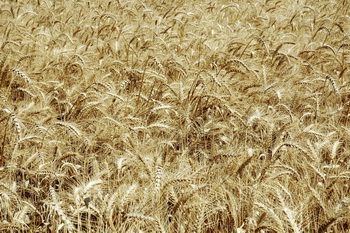Origin of Agriculture Defies Evolutionary Long Ages | CEH