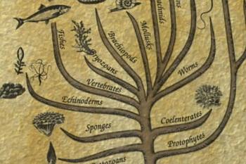Darwin's Tree Is Dead | CEH