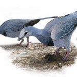 Soft Lung Tissue Found in Modern-Looking Bird from Dinosaur Era