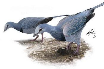 Soft Lung Tissue Found in Modern-Looking Bird from Dinosaur Era | CEH
